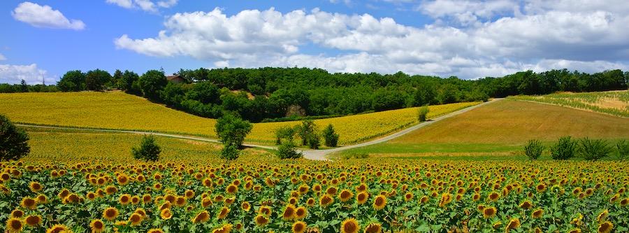 Facebook cover Tonnac France 2015 Zonnebloemen op kruispunt van landwegen.