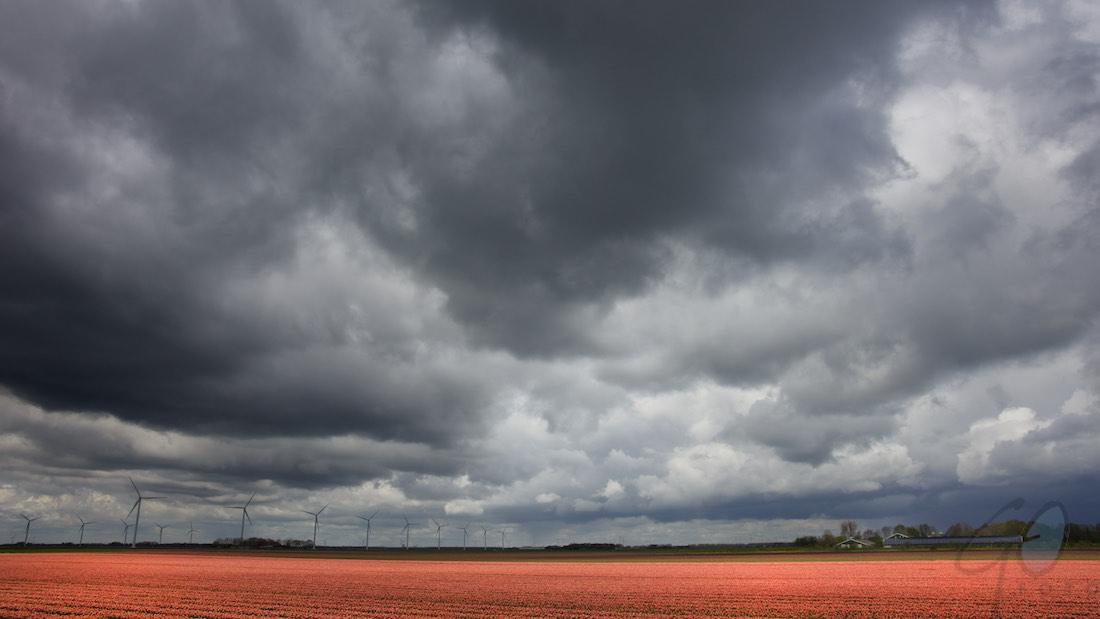 Koningsdag in de polder