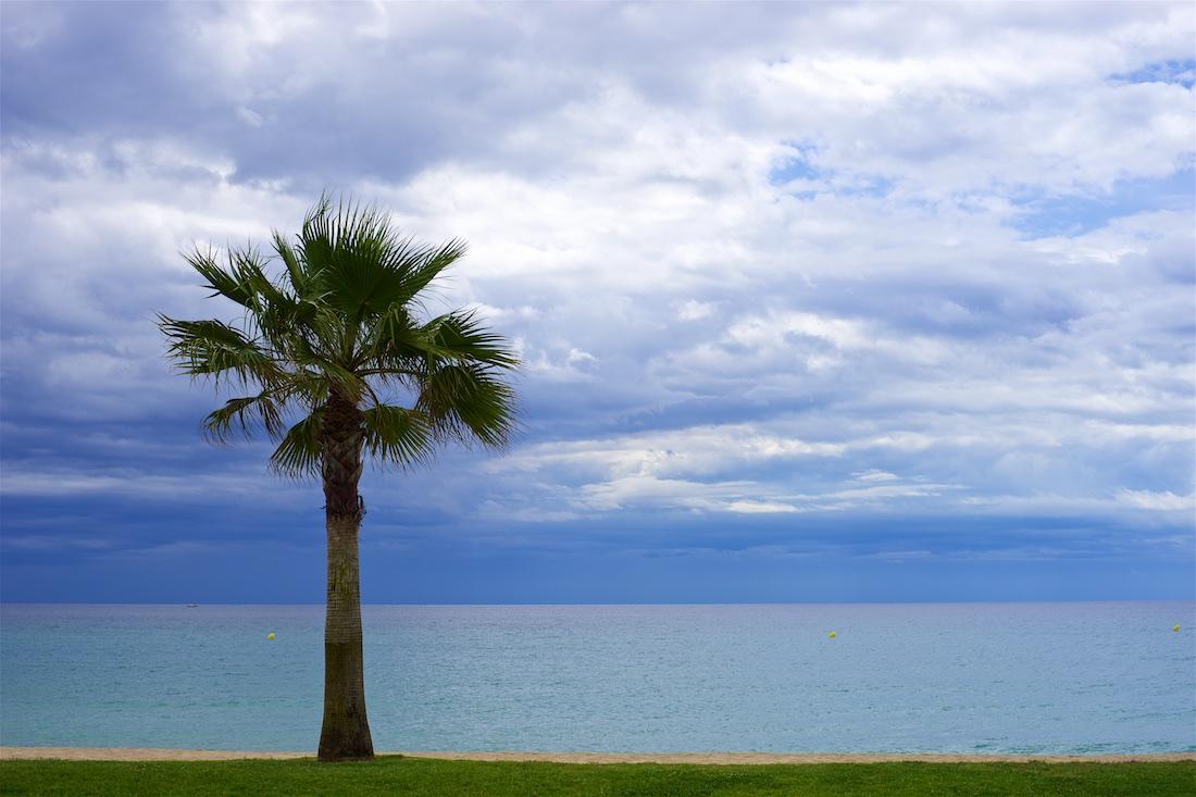 Foto van Gillian Flynn Palmboom aan strand