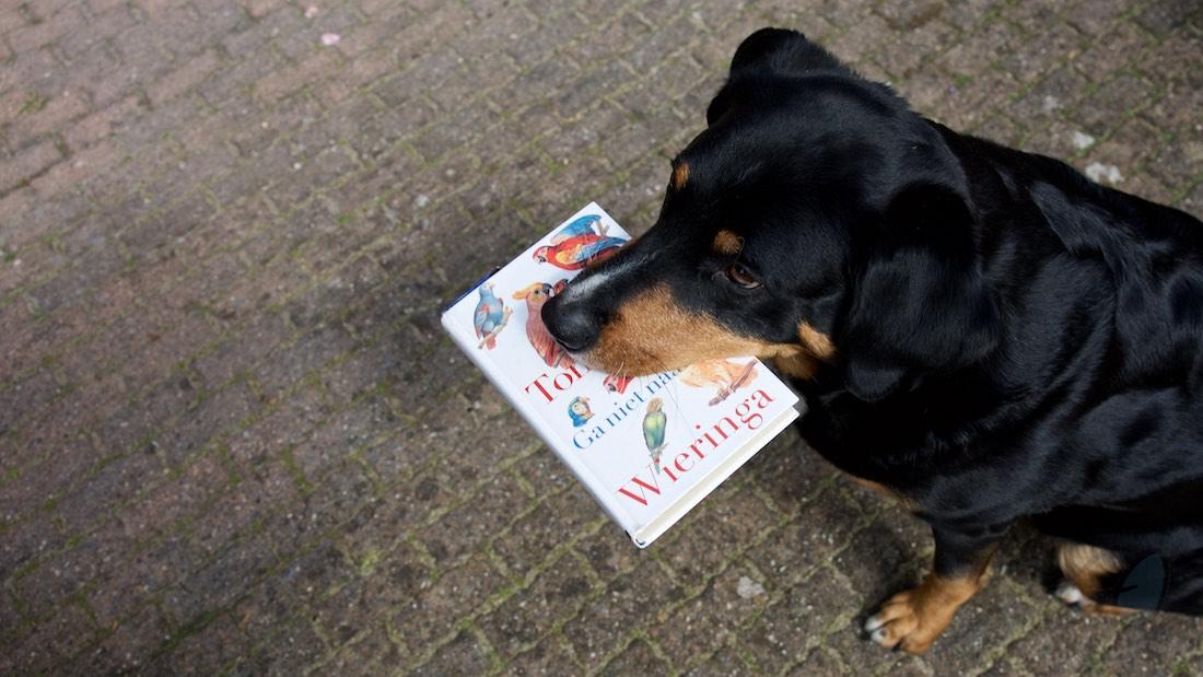 De ontkenning van Tommy Wieringa Hond met boek in bek