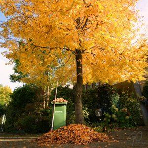 Nadagen van de fotocamera blog gofoto gele boom