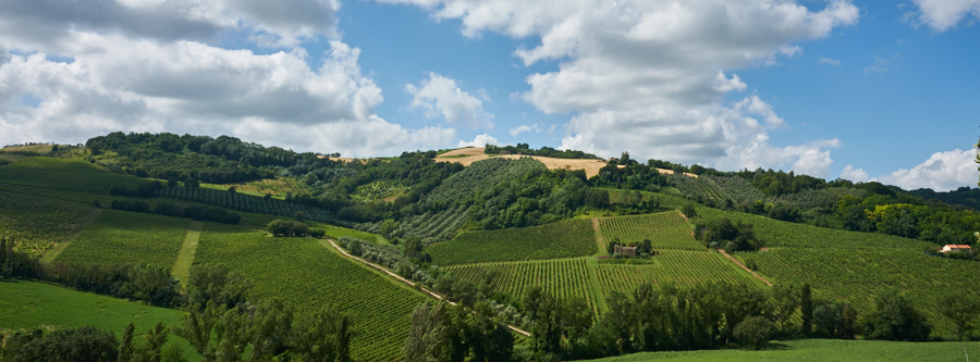 Gekke fotografen wijnvelden - ©Gerard Oonk