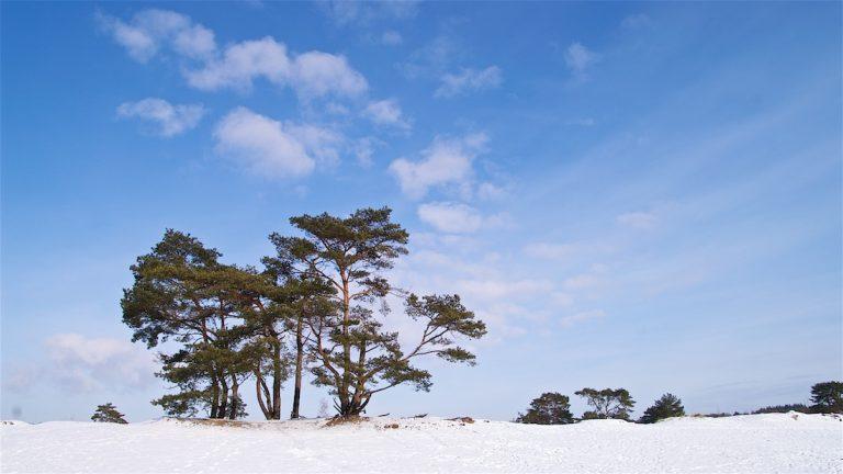 Luchtwortelbomen in de Soesterduinen - ©Gerard Oonk - PICT7213 001