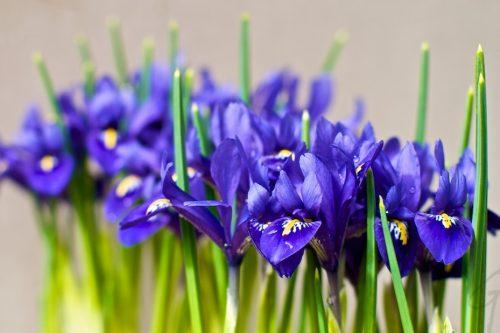 Dagfoto 091-2010 Voorjaar Pasen