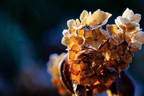 Dagfoto 004-2011 - Tuinbloemen - ©Gerard Oonk