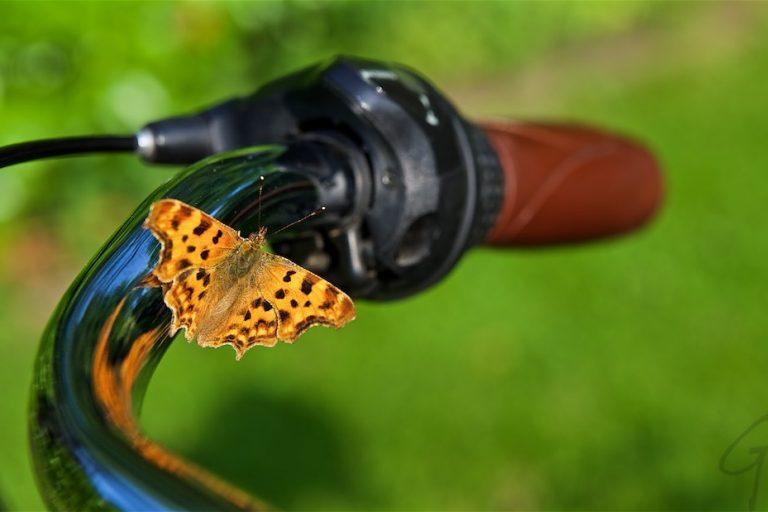 Dagfoto 177-2011 Tuinbloemen